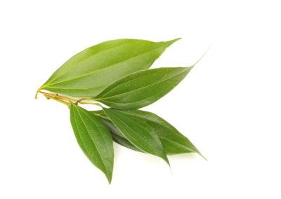 Cannelier feuilles